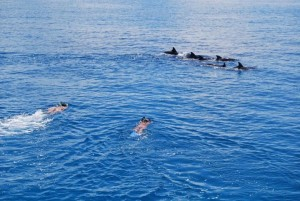 Snorkeling-with-dolphins